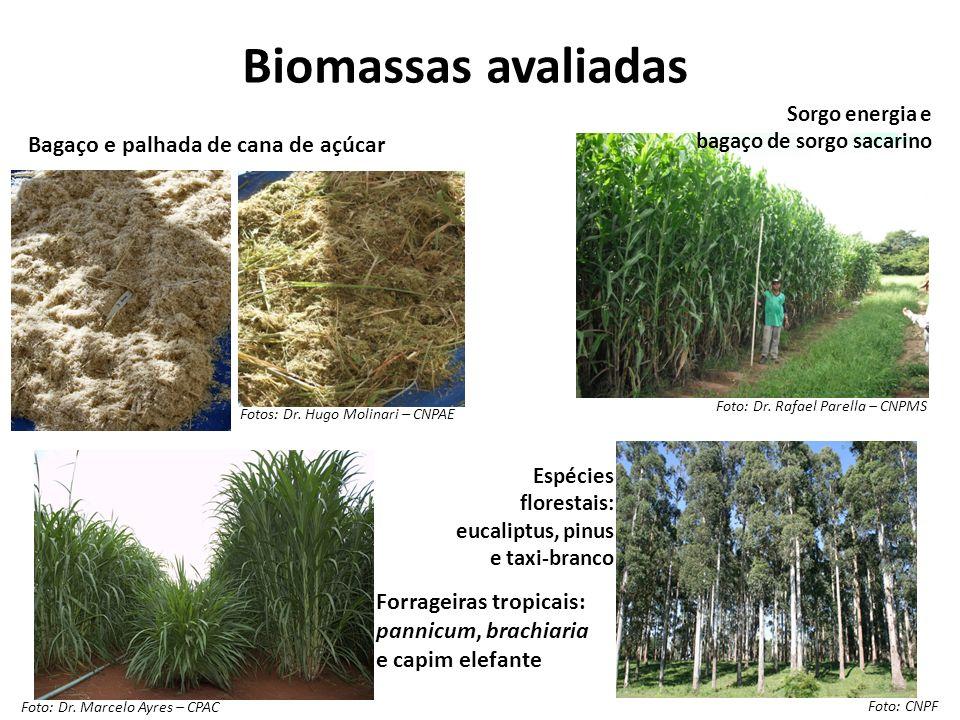 Biomassas avaliadas Bagaço e palhada de cana de açúcar