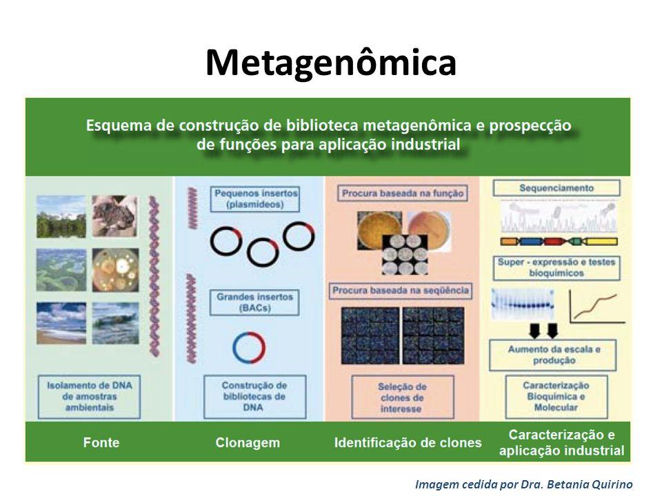 Metagenômica Imagem cedida por Dra. Betania Quirino