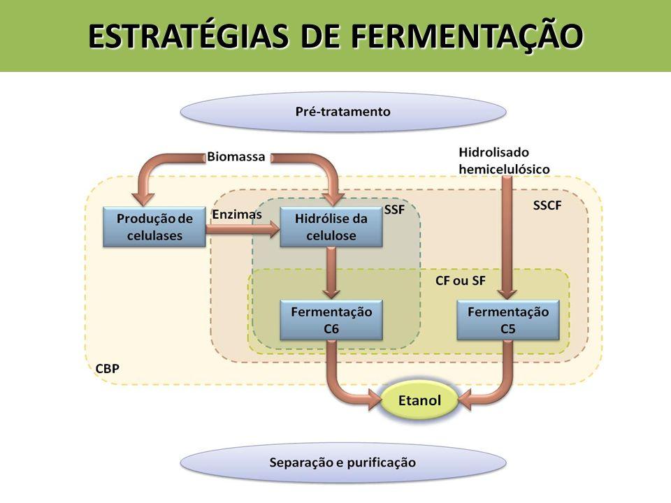 ESTRATÉGIAS DE FERMENTAÇÃO