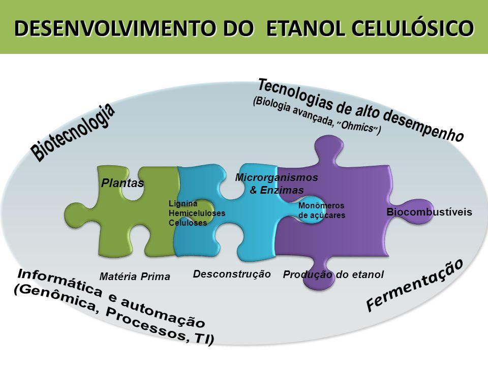 DESENVOLVIMENTO DO ETANOL CELULÓSICO