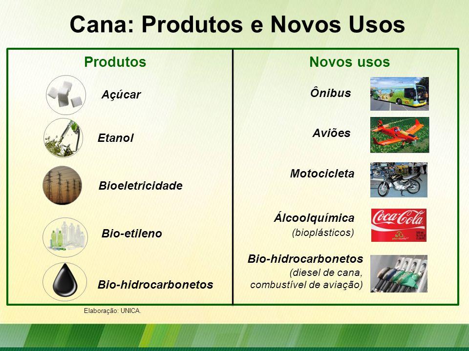Cana: Produtos e Novos Usos