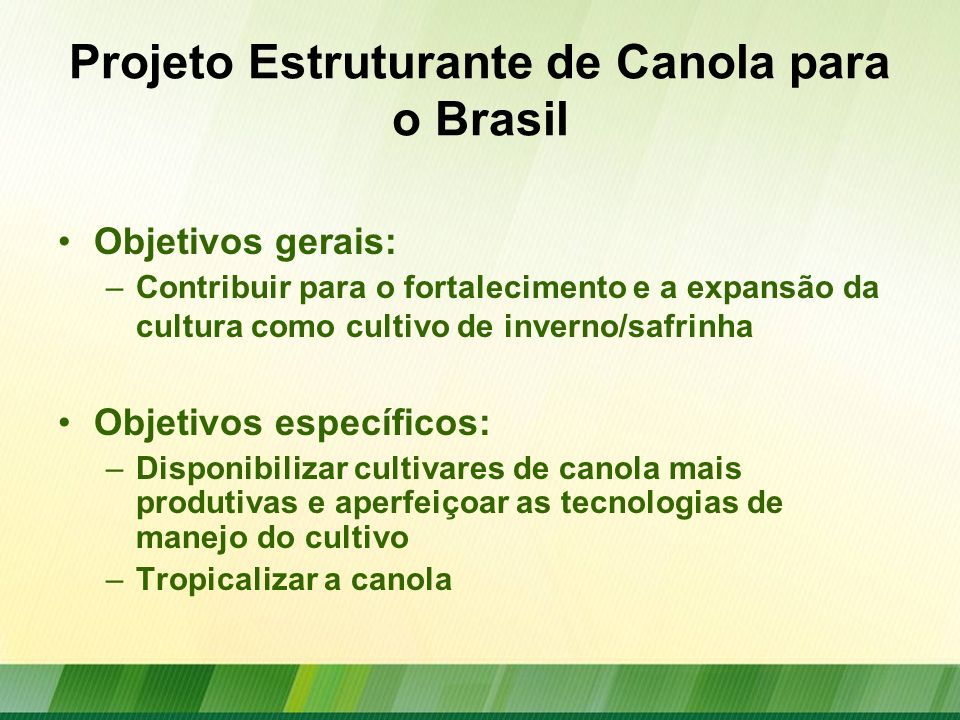 Projeto Estruturante de Canola para o Brasil