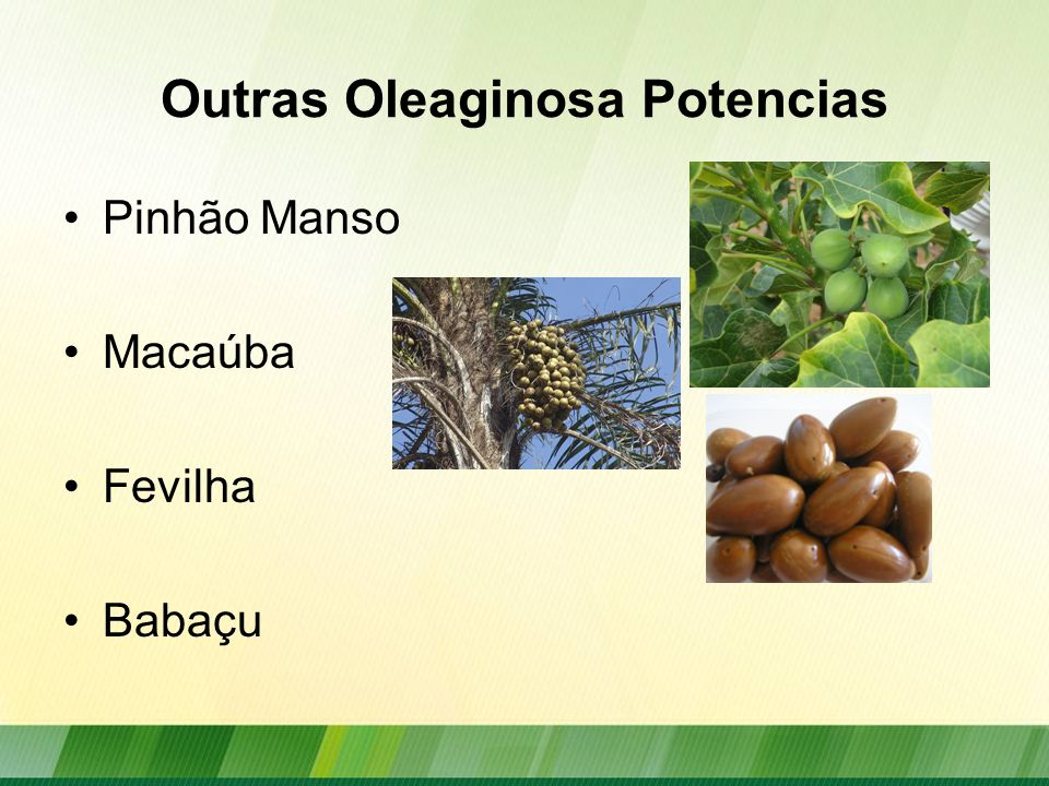 Outras Oleaginosa Potencias