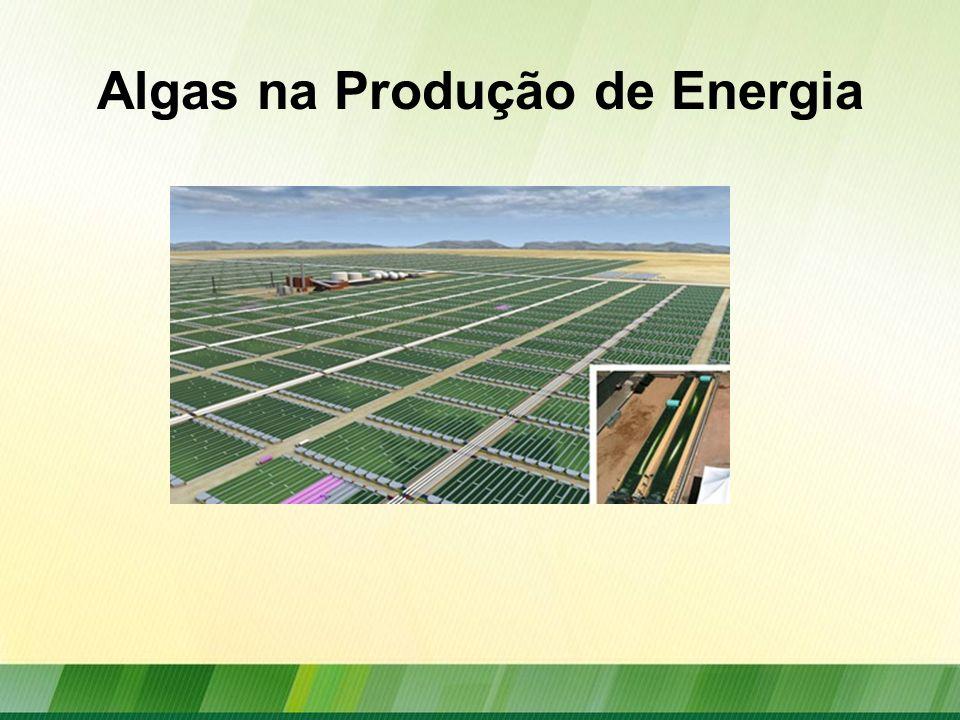 Algas na Produção de Energia