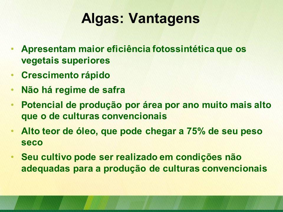 Algas: Vantagens Apresentam maior eficiência fotossintética que os vegetais superiores. Crescimento rápido.