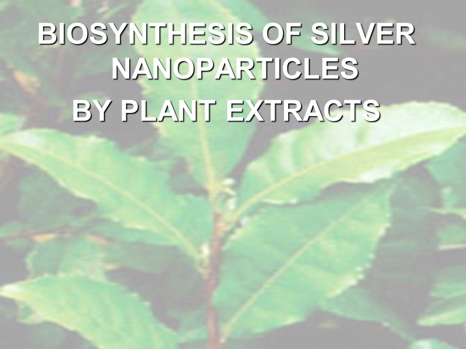 BIOSYNTHESIS OF SILVER NANOPARTICLES
