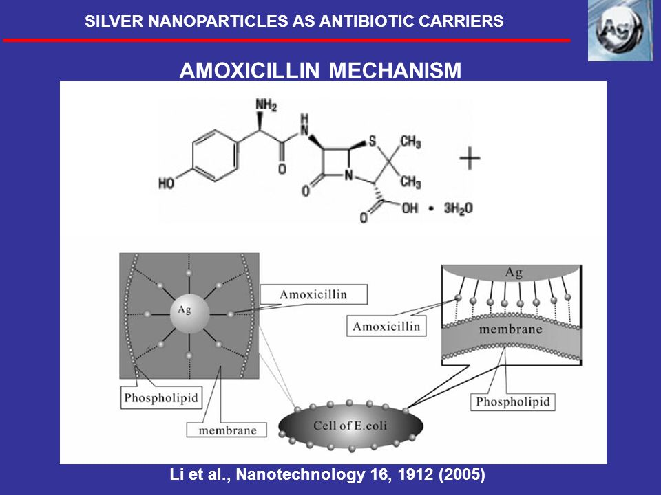 AMOXICILLIN MECHANISM