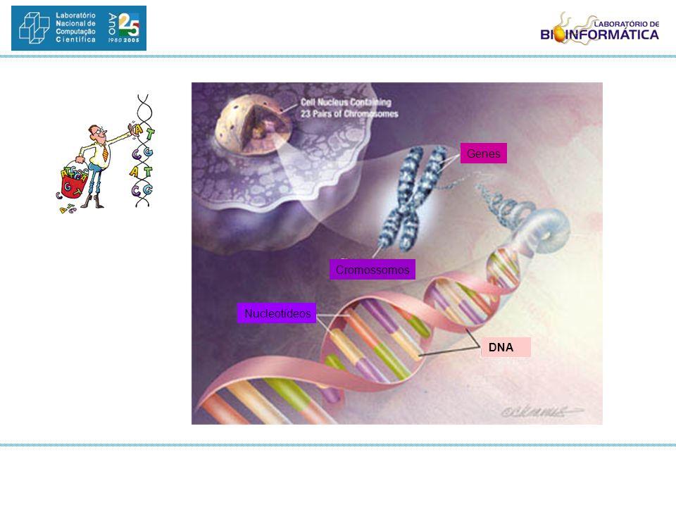 Genes Cromossomos Nucleotídeos DNA