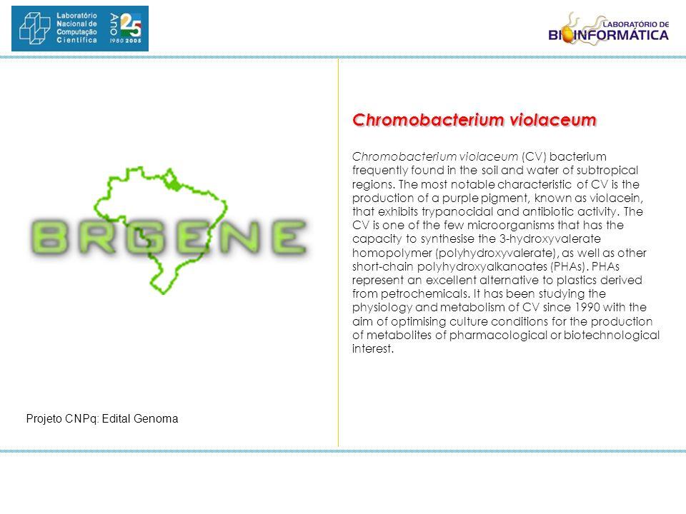 Chromobacterium violaceum