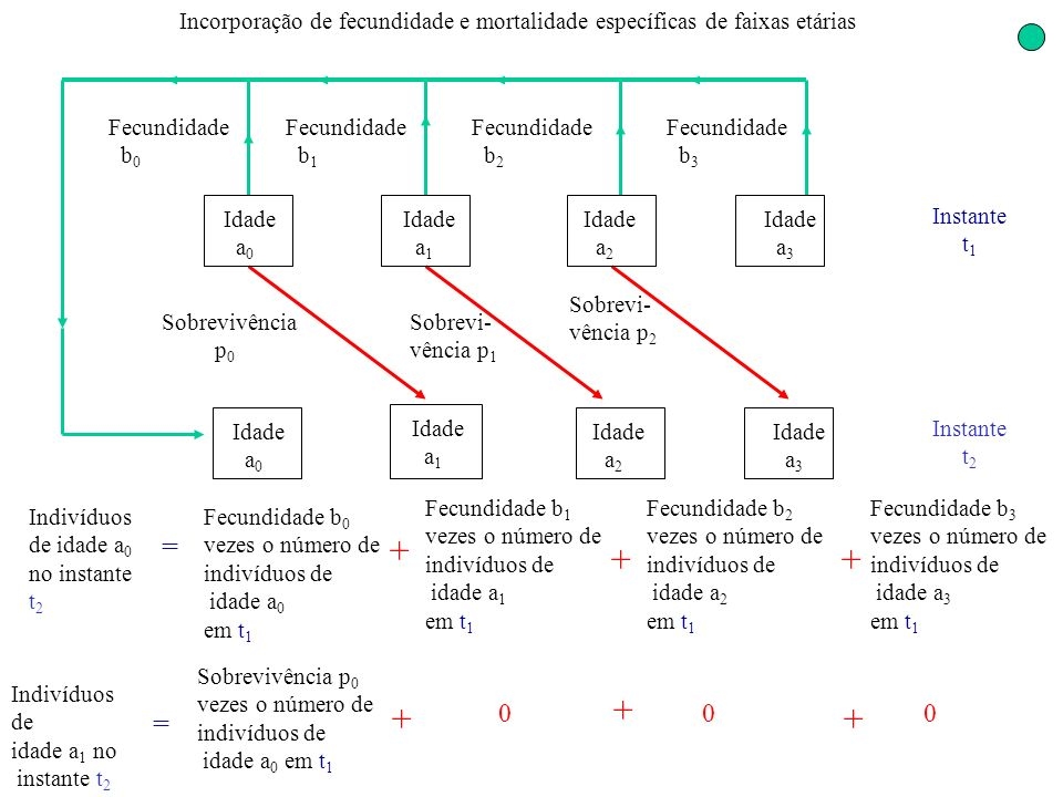 Incorporação de fecundidade e mortalidade específicas de faixas etárias