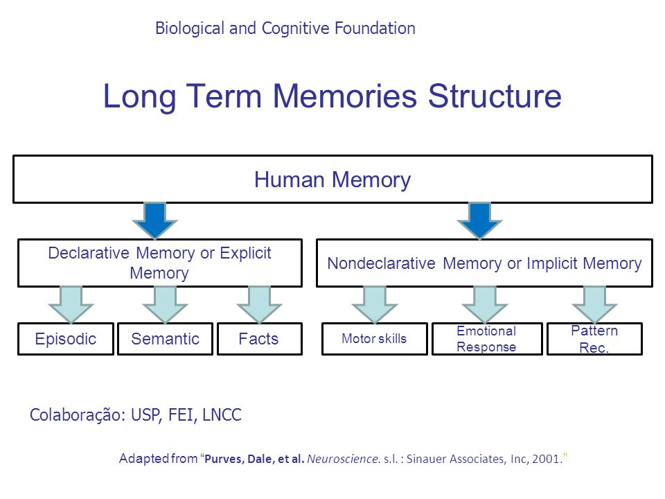 Long Term Memories Structure