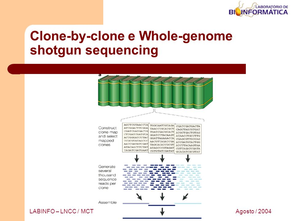 Clone-by-clone e Whole-genome shotgun sequencing