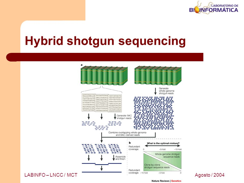 Hybrid shotgun sequencing