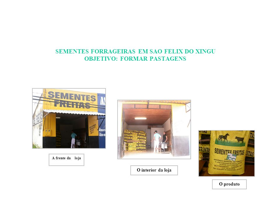 SEMENTES FORRAGEIRAS EM SAO FELIX DO XINGU OBJETIVO: FORMAR PASTAGENS