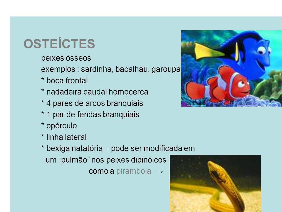 OSTEÍCTES peixes ósseos exemplos : sardinha, bacalhau, garoupa