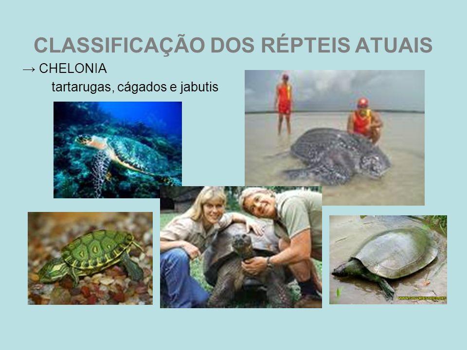 CLASSIFICAÇÃO DOS RÉPTEIS ATUAIS