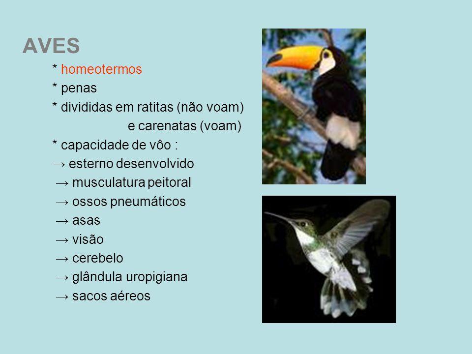 AVES * homeotermos * penas * divididas em ratitas (não voam)