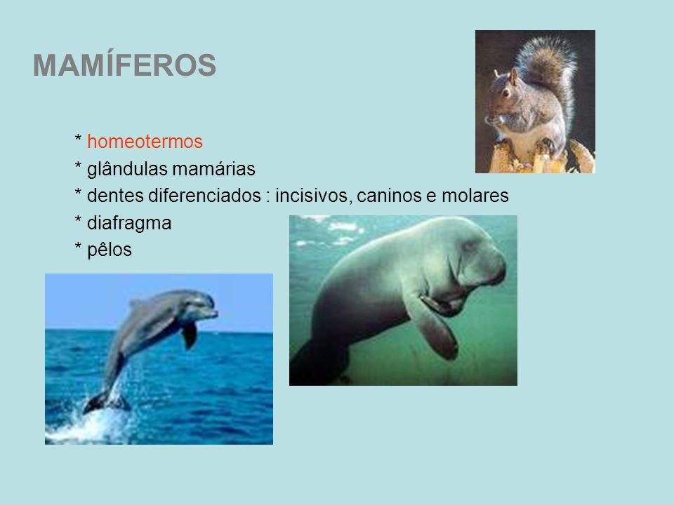MAMÍFEROS * homeotermos * glândulas mamárias