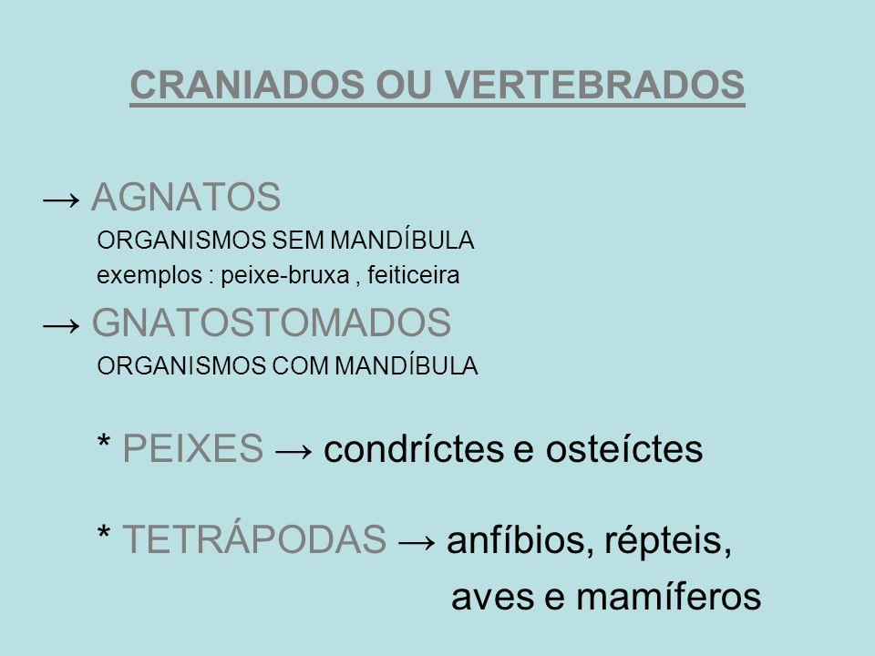 CRANIADOS OU VERTEBRADOS