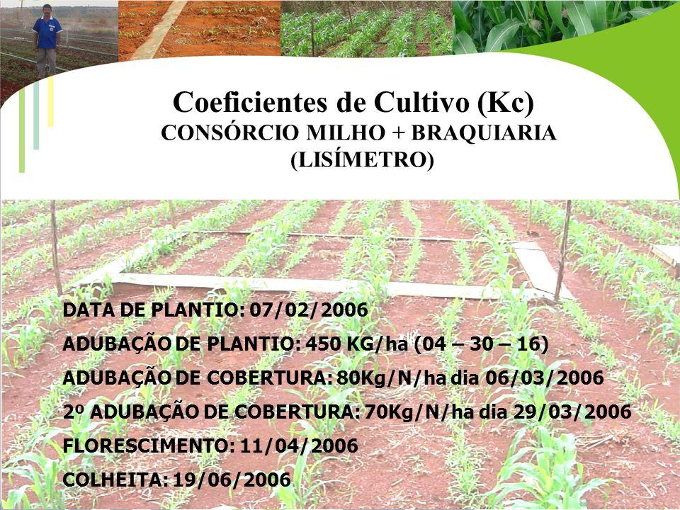 CONSÓRCIO MILHO + BRAQUIARIA
