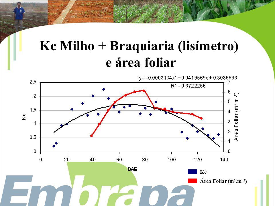 Kc Milho + Braquiaria (lisímetro)