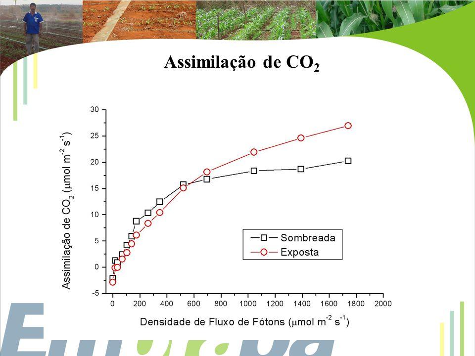 Assimilação de CO2