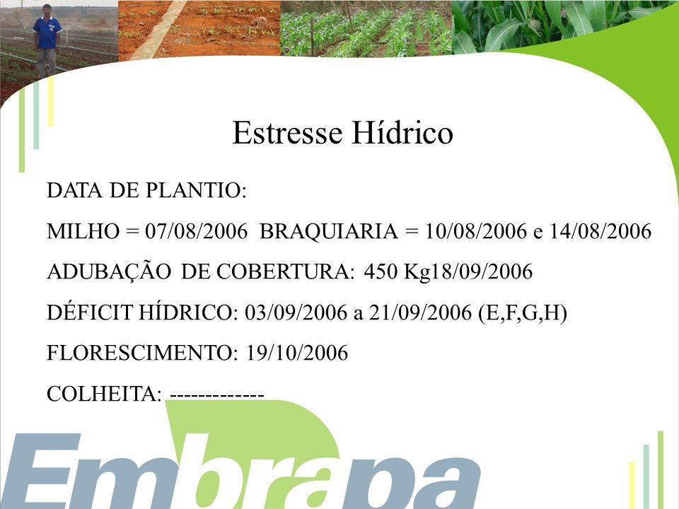 Estresse Hídrico DATA DE PLANTIO: