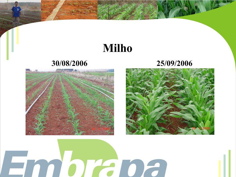 Milho 30/08/2006 25/09/2006