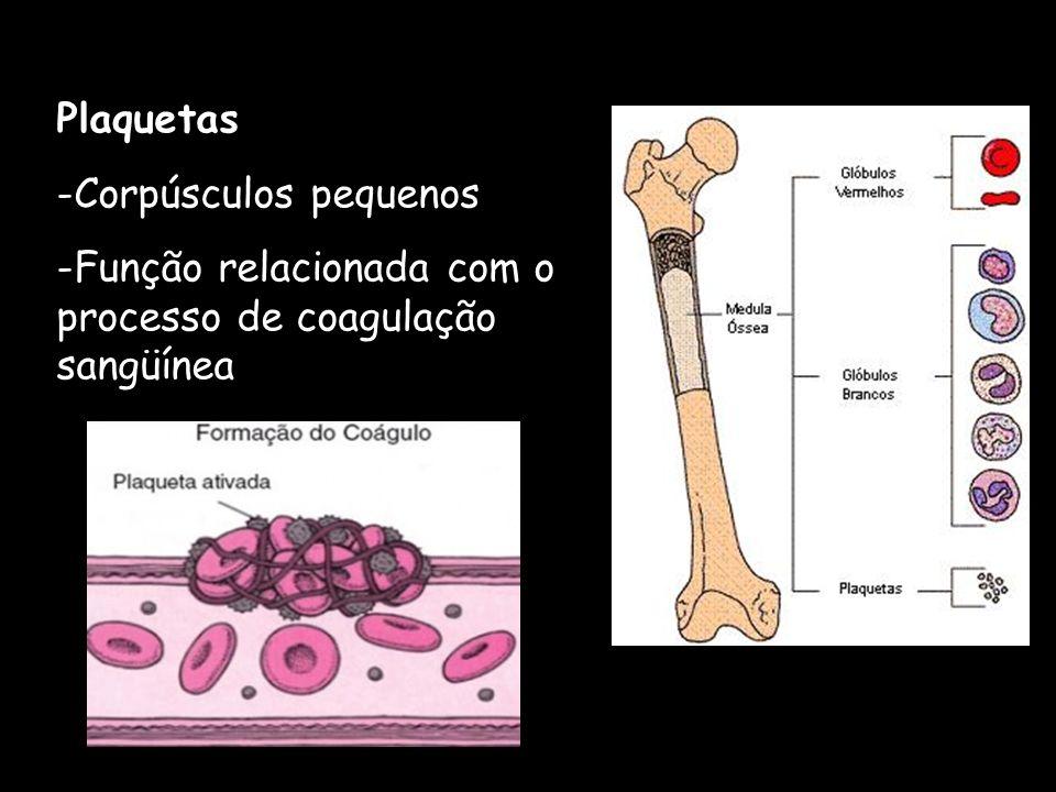 Plaquetas Corpúsculos pequenos Função relacionada com o processo de coagulação sangüínea