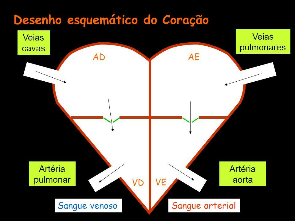 Desenho esquemático do Coração