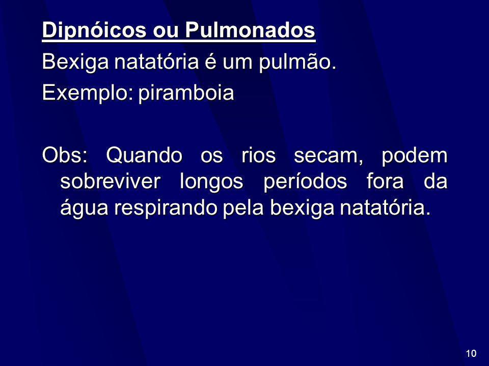Dipnóicos ou Pulmonados