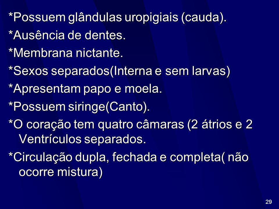 *Possuem glândulas uropigiais (cauda).