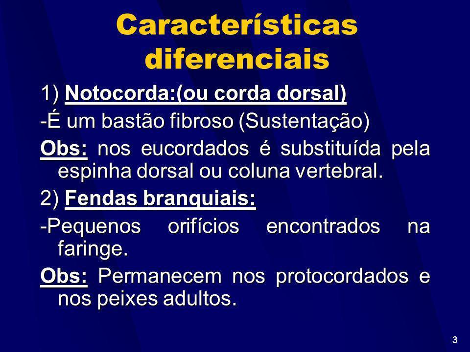 Características diferenciais
