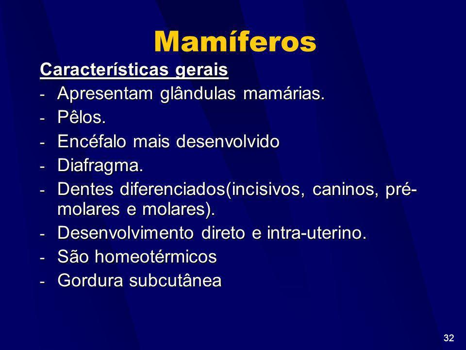 Mamíferos Características gerais Apresentam glândulas mamárias. Pêlos.