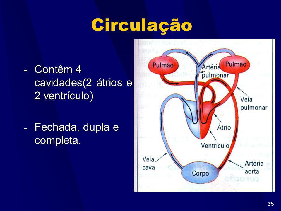 Circulação Contêm 4 cavidades(2 átrios e 2 ventrículo)