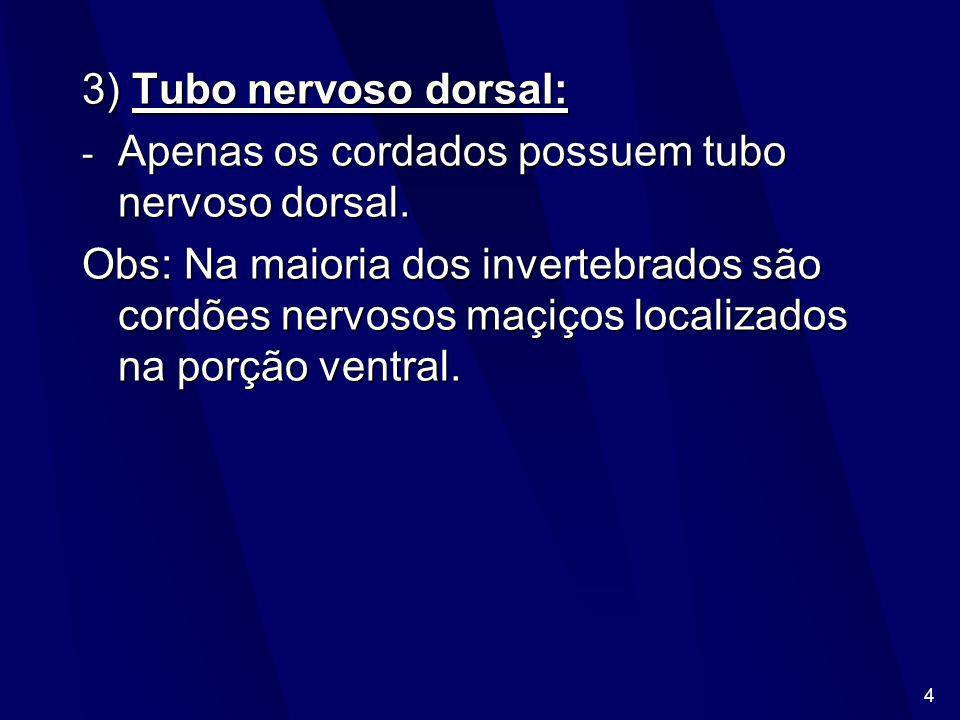 3) Tubo nervoso dorsal:Apenas os cordados possuem tubo nervoso dorsal.