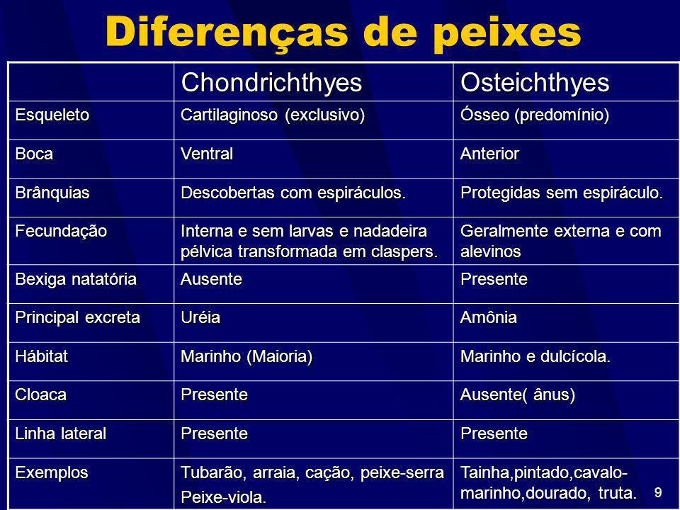 Diferenças de peixes Chondrichthyes Osteichthyes Esqueleto