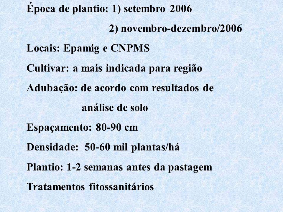 Época de plantio: 1) setembro 2006