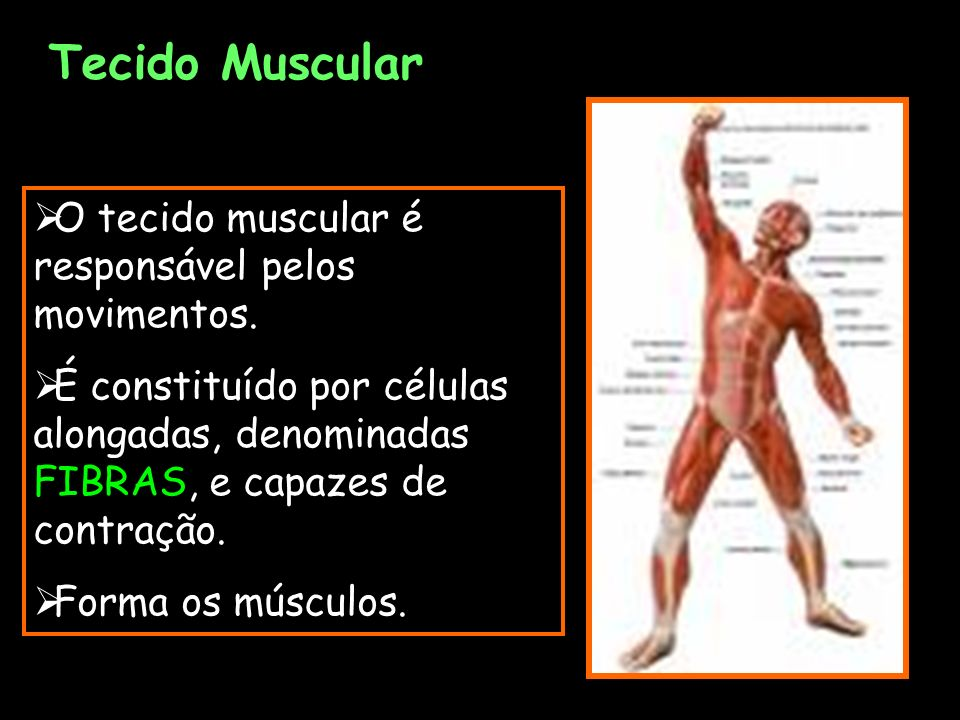 Tecido Muscular O tecido muscular é responsável pelos movimentos.