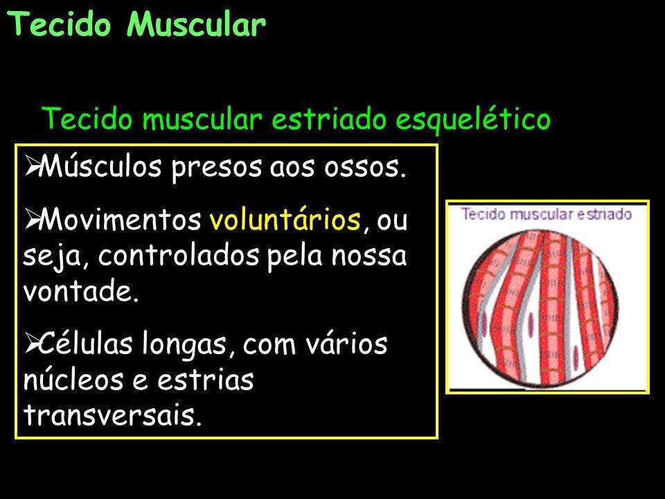 Tecido Muscular Tecido muscular estriado esquelético