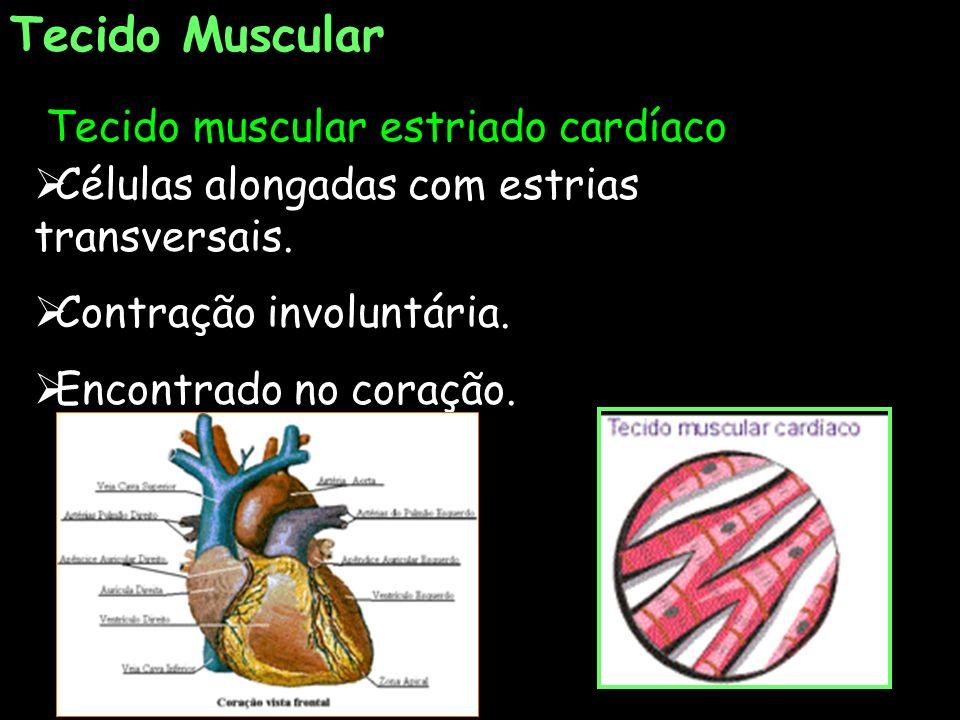 Tecido Muscular Tecido muscular estriado cardíaco