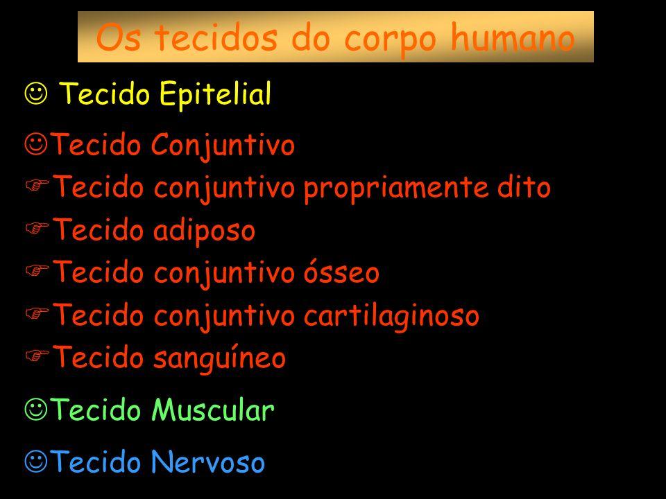 Os tecidos do corpo humano