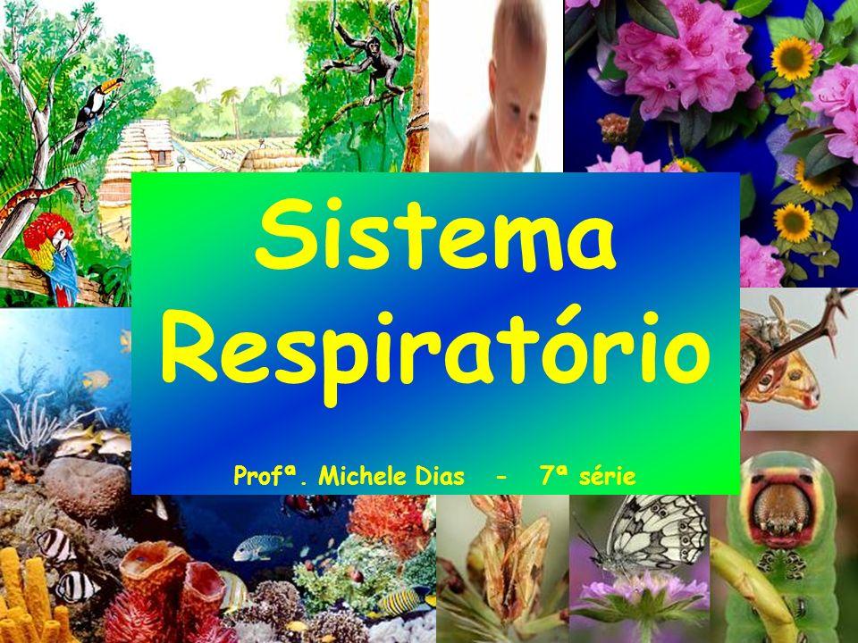 Profª. Michele Dias - 7ª série