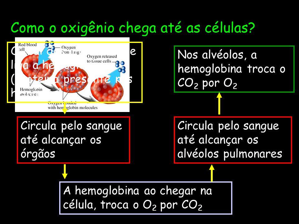 Como o oxigênio chega até as células