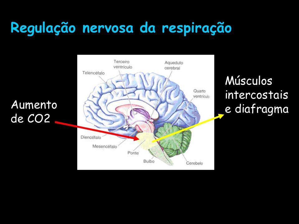 Regulação nervosa da respiração
