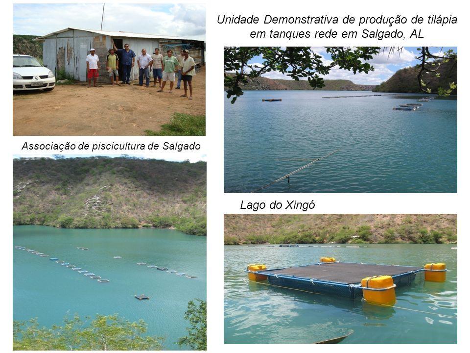 Unidade Demonstrativa de produção de tilápia em tanques rede em Salgado, AL