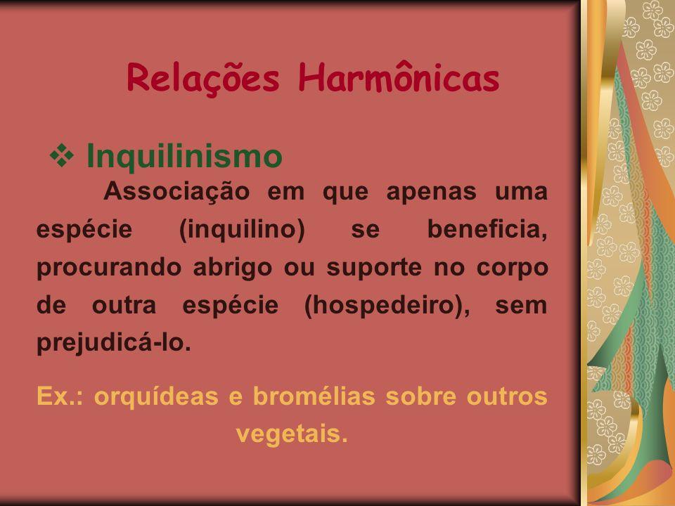Relações Harmônicas Inquilinismo