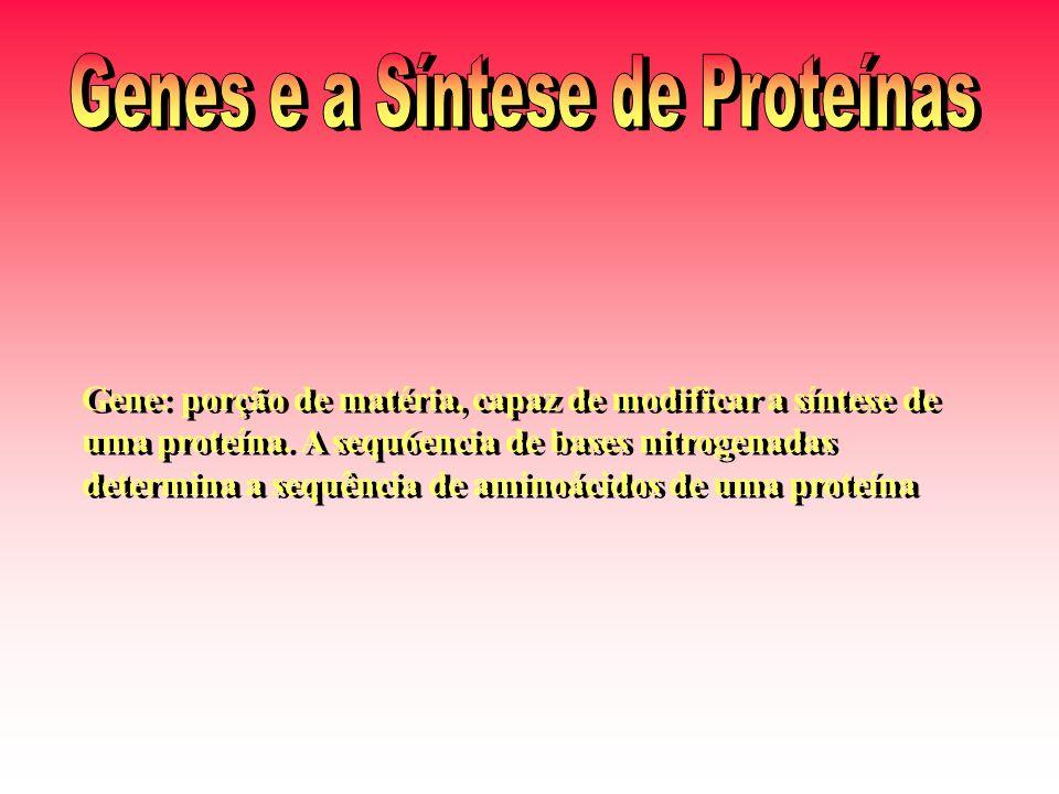 Genes e a Síntese de Proteínas