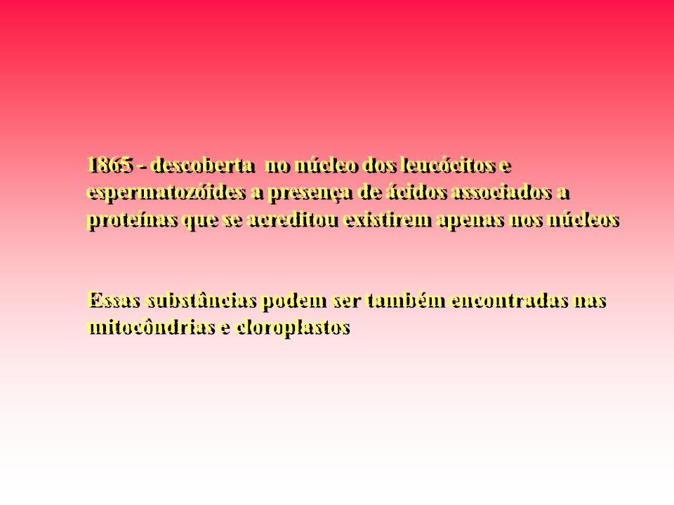 1865 - descoberta no núcleo dos leucócitos e espermatozóides a presença de ácidos associados a proteínas que se acreditou existirem apenas nos núcleos