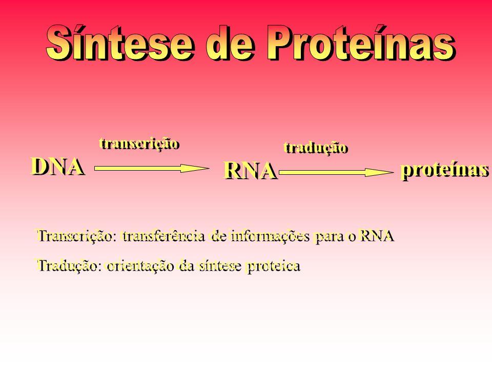 Síntese de Proteínas DNA RNA proteínas transcrição tradução